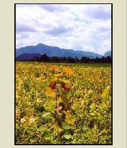 Adirondack & Valley Cards